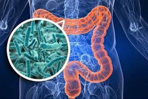 микробиота-кишечника-арго га